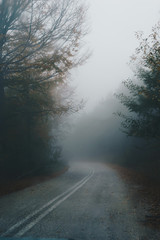 Autumn landscape, foggy road in forest