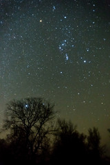 Orion constellation above a night forest