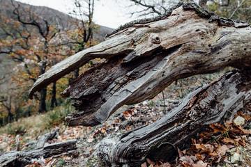Ein alter Baumstamm gleicht einer Kreatur