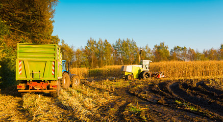 Fotoväggar - corn harvest
