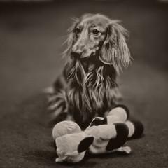 мой пёс Фигаро