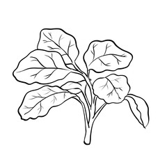 Isolated Watercress-Vector Hand drawn Illustration