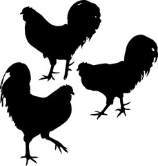 group of three chicken silhouettes on white
