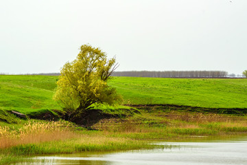 Fantasy summer landscape with lonesome tree