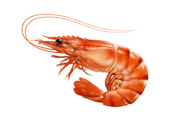 Red cooked prawn or tiger shrimp isolated on white background