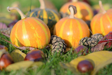 striped orange pumpkin among cones and chestnuts