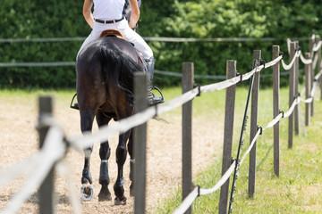 Foto op Aluminium Paardrijden Springpferd