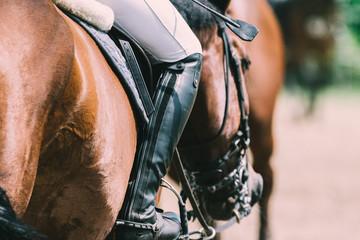 Photo sur Plexiglas Equitation Springpferd