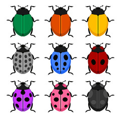 Color Ladybug Set on White Background. Vector