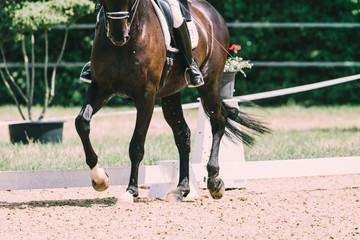 Foto op Aluminium Paardrijden Dressurpferd