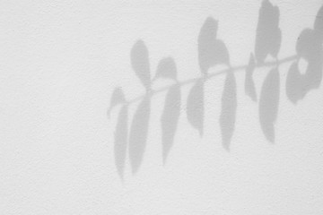 shadow of branches and leaves on white cement wall Wall mural