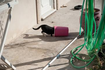Katze kriecht in Kübel