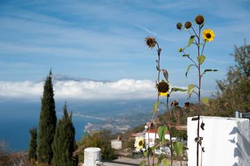 Sonnenblumen vor schöner Aussicht