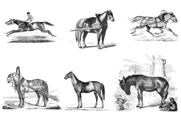 Engraving of horses.