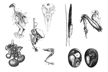 Illustration. The anatomy of birds.