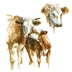 Set of watercolor cow