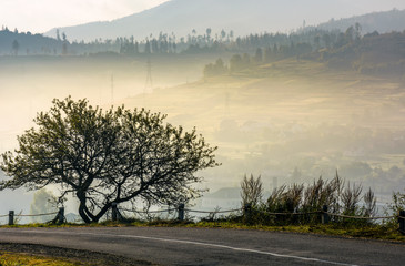 tree on hillside over the rural valley. beautiful countryside scenery in mountain