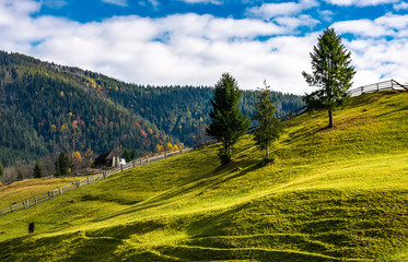 trees on grassy rural hillside. wonderful sunny autumn day in mountains