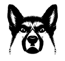 black and white linear paint draw dog illustration