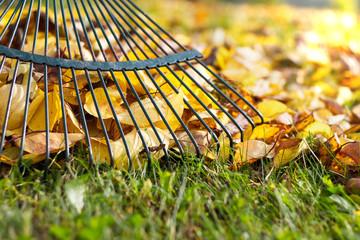 Raking fallen leaves in the garden , detail of rake in autumn season
