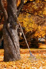 rake next to the tree in the autumn garden