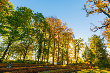Autumn trees at graveyard