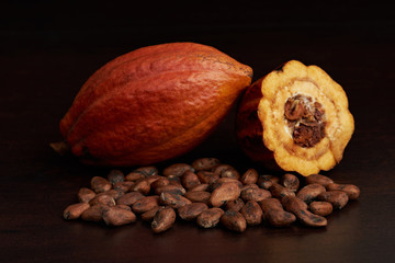 Cacao harvest fruit theme