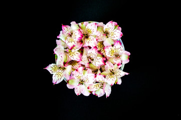 bunch of colorful alstromeria flowers in a bowl isolated on black