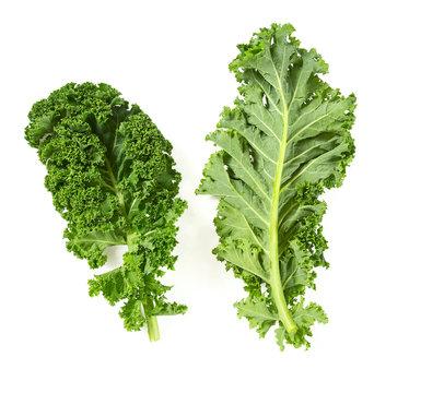 kale isolated on white background