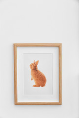 Picture of cute baby rabbit on white wall