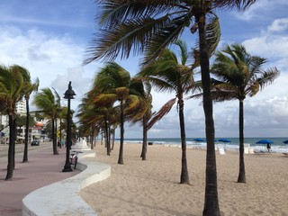 Palm Trees Blowing in the Wind at Fort Lauderdale Beach, Fort Lauderdale, Florida