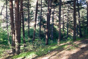 Orman içinden görüntü