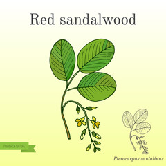 Red sandalwood branch
