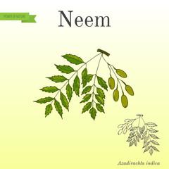 Neem tree, medicinal plant