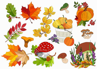 bright autumn collection of leaves, pumpkins and mushrooms