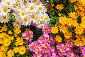Some colourful flowers
