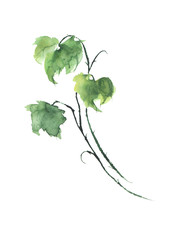 Green branch with currant leaves on white isolated background. Watercolor illustration for your design.