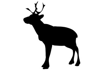 isolated silhouette of a deer with horns