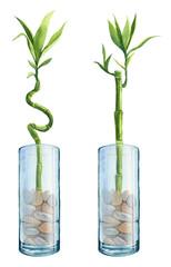bambus w wazonie