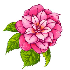 Exotic pink flower. Camellia with green leaves. Paradise flower.
