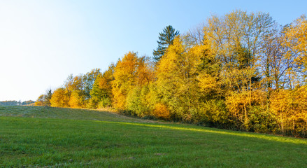 Autumn landscape with colorful fall foliage in orange and yellow