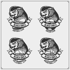 Volleyball, baseball, soccer and football logos and labels. Sport club emblems with owl.