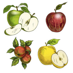 Apples with leaves and halves of fruits.
