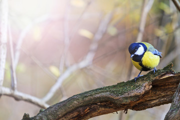forest bird on a dry branch