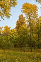 Autumn city park, Minsk, Belarus