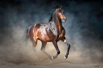 Bay stallion in dark dramatic background