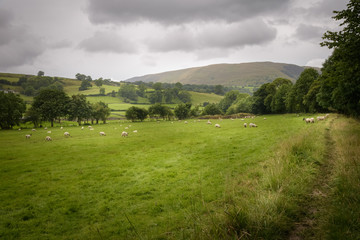 Rural and green English countryside with sheep grazing and path leading into the landscape