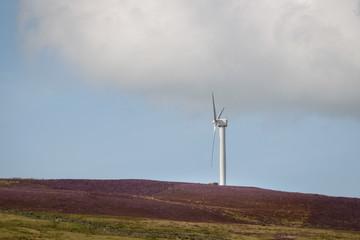 One windmill or wind turbine in the purple heather field England