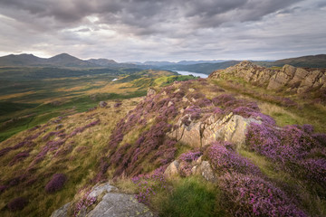 Golden light striking the purple heath and the stunning landscape of the lake district of England mountain and lake background