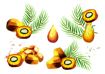 Palm fruits and oil set. Hand drawn watercolor illustration